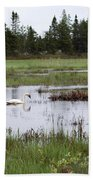 Pond And Swans Beach Towel