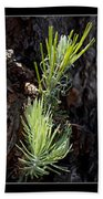 Ponderosa Pine Wide Beach Towel