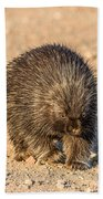 Porcupine Walking Beach Towel