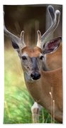 Portrait Of A Beautiful Buck  Beach Towel