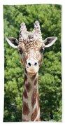 Portrait Of A Giraffe Beach Towel