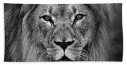 Portrait Of A Male Lion Black And White Version Beach Towel