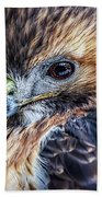Portrait Of A Red-tailed Hawk Beach Towel
