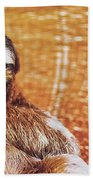 Portrait Of A Sloth Pet Looking In The Camera Beach Towel