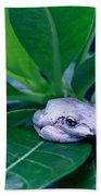 Portrait Of A Tree Frog Beach Towel