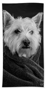 Portrait Of A Westie Dog 8x10 Ratio Beach Towel