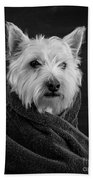 Portrait Of A Westie Dog Beach Sheet