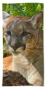 Portrait Of A Young Florida Panther Beach Towel