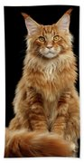 Portrait Of Ginger Maine Coon Cat Isolated On Black Background Beach Towel by Sergey Taran