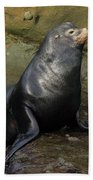 Posing Sea Lion Beach Towel