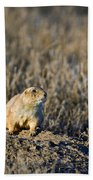 Prairie Dog Alert Beach Towel