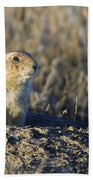 Prairie Dog Watchful Eye Beach Towel