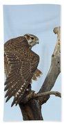 Prairie Falcon Stretching Beach Towel