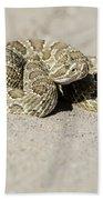 Prairie Rattlesnake  Beach Towel