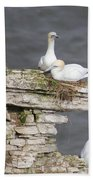 Precarious Nesting Bempton Gannets Beach Towel