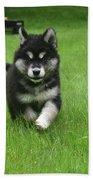 Precious Alusky Puppy Dog Running In A Yard Beach Sheet