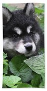 Precious Fluffy Alusky Puppy Dog In Green Foliage Beach Sheet