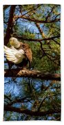 Preening Bald Eagle Beach Towel