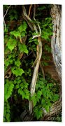 Preston Wall Vine Beach Towel
