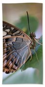 Pretty Butterfly Resting On The Leaf Beach Towel