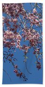Pretty In Pink - A Flowering Cherry Tree And Blue Spring Sky Beach Towel