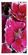 Pretty Pinks Beach Towel