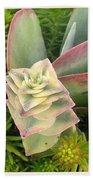 Pretty Succulents Beach Towel