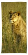 Princely Lion Beach Towel