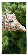 Profile Of A Giraffe Beach Towel