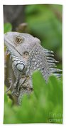 Profile Of A Gray Iguana Perched In A Bush Beach Towel