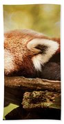 Profile Of A Red Panda Beach Towel