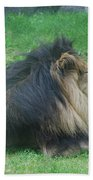 Profile Of A Sleeping Lion In Grass Beach Towel