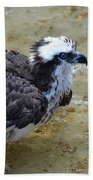 Profile Of An Osprey In Shallow Water Beach Towel