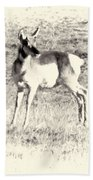 Pronghorn Angelope Beach Towel