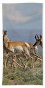Pronghorn Antelope Running Beach Towel