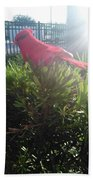 Prop Cardinal #2 Beach Sheet