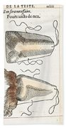 Prosthetic Noses, Ambroise Pare, 1561 Beach Towel