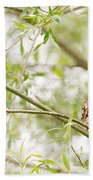 Puffed Up Little Owl In A Willow Tree Beach Towel