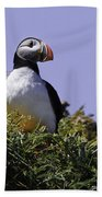 Puffin On The Rock Beach Towel