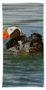 Puffin With A Prize Beach Towel