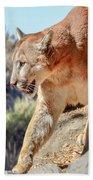Puma Mountain Lion Nature Wear Beach Towel