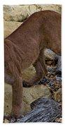 Puma Stalking Beach Towel