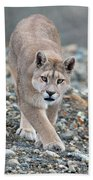 Puma Walk Beach Towel