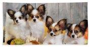 Puppy  Beach Sheet