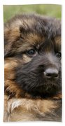 Puppy Portrait II Beach Towel