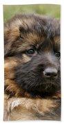 Puppy Portrait II Beach Towel by Sandy Keeton