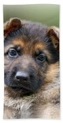 Puppy Portrait Beach Towel