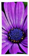Purple African Daisy Beach Towel