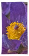 Purple And Gold Beach Towel