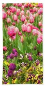 Purple And Pink Tulips In Canberra In Spring Beach Towel